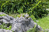 Close up Limestone in Akiyoshidai Quasi-National Park, Mine, Yamaguchi, JAPAN.