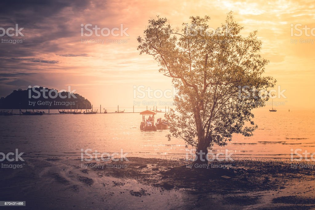 Close up lonely tree standing on ground surrounded whit sea in twilight tine. stock photo