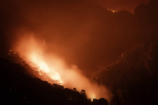Close up look of a forest under fire. stock photo