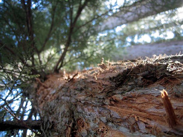 Close, Up Looking into a Tree stock photo