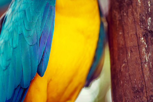 Texture and color in a tropical bird