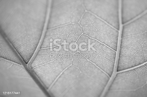 637513166 istock photo Close up macro leaf texture simplicity in nature 1215177441