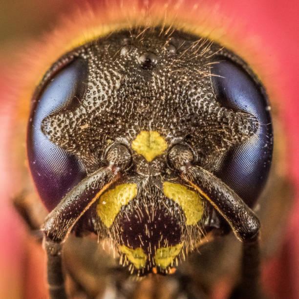 Close up macro of wasp stock photo