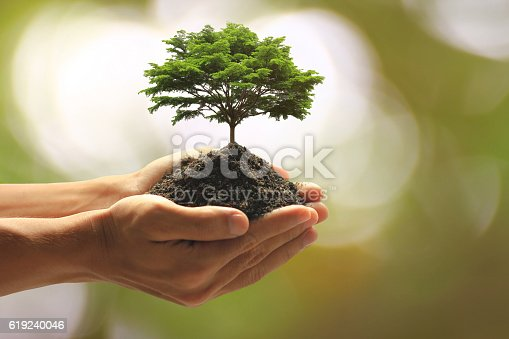 Close up Man holding green plant in hand