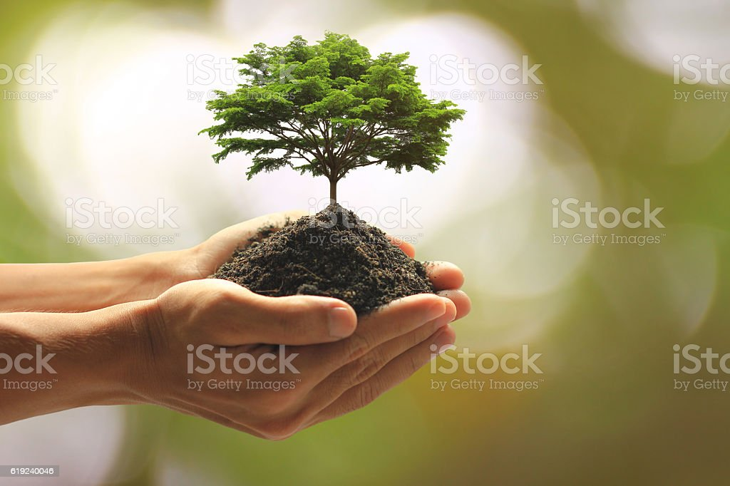 Close up Man holding green plant in hand stock photo