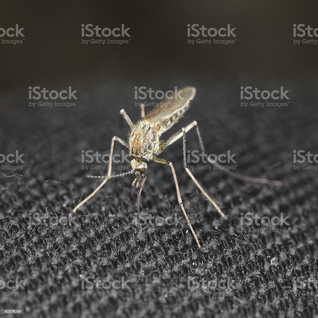 Close up mosquito bite through a cloth royalty-free stock photo