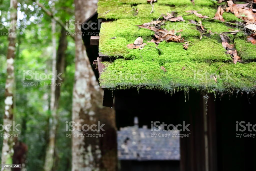 Close up moss and fern on old roof of house in countryside. royalty-free stock photo