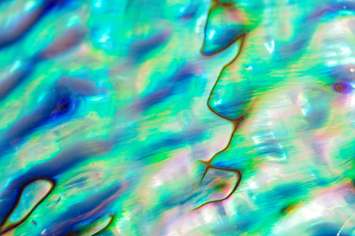 istock Close up multicolour texture background of paua shell, haliotis iris or Abalone shell 1071983682