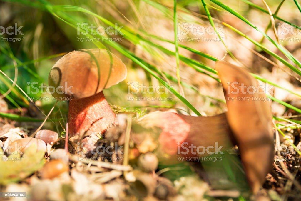 Close-up paddestoel zoeken in nationaal park Oisterwijkse Plassen, Nederland foto