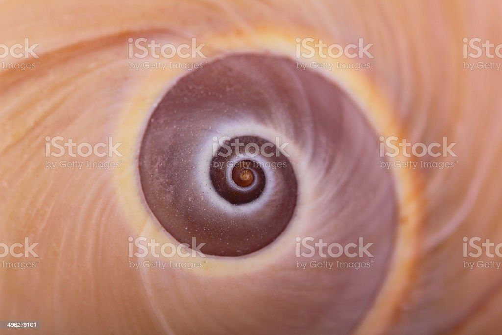 Close up Nautilus stock photo