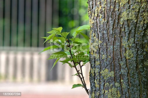 istock Close up New Leaves In The Light At Amsterdam The Netherlands 1323007234