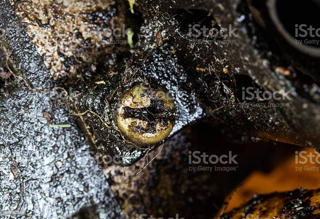 Close up nuts leaked engine oil on old machine Close up nuts leaked engine oil on old machine 2015 Stock Photo
