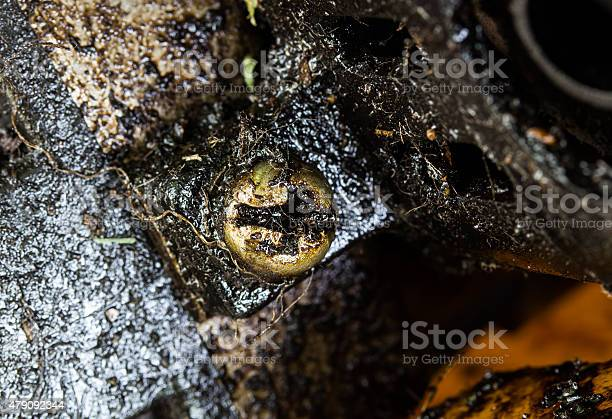 Close Up Nuts Leaked Engine Oil On Old Machine Stock Photo - Download Image Now
