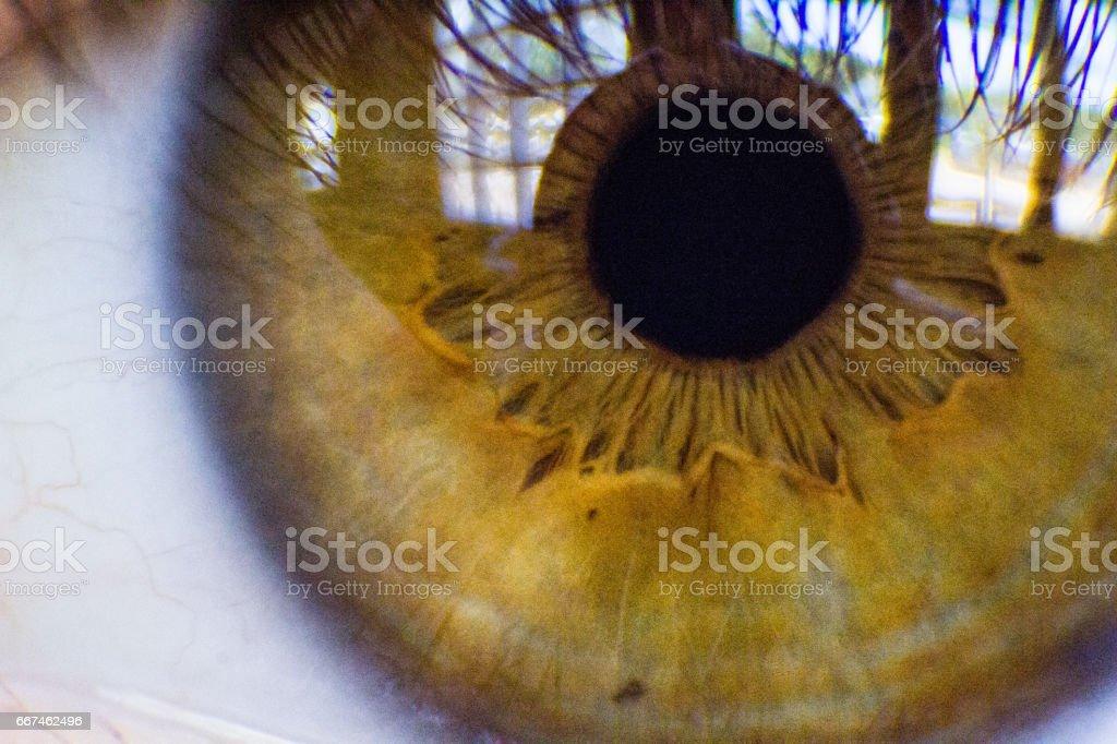 Nahaufnahme eines Auges Amber – Foto
