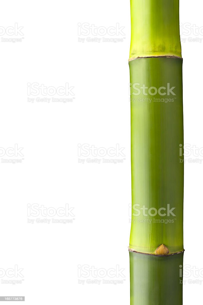 Close up of a bamboo stalk with clipping path stock photo