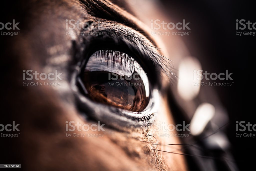 Close Up Of A Bay Horses Eye Stock Photo - Download Image