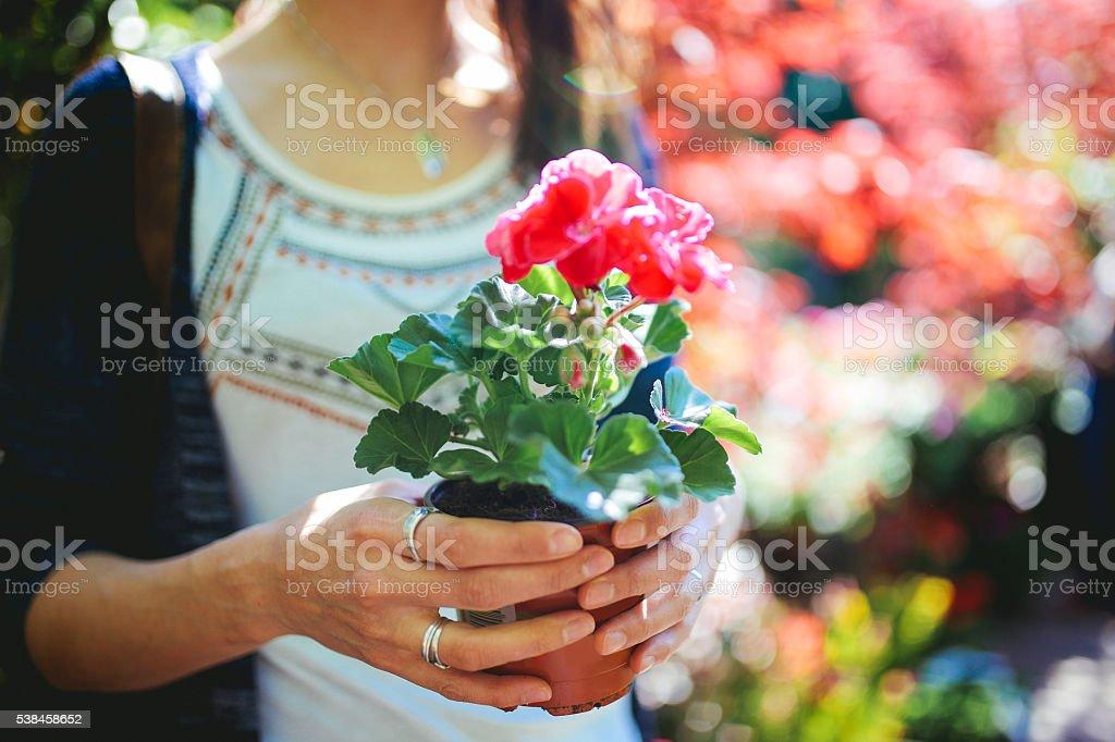 Nahaufnahme eines wunderschönen Blume Geschenk – Foto