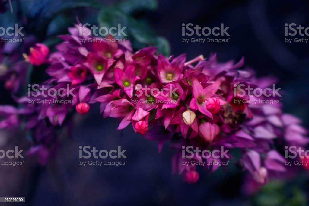 Close Up OF A beautiful flower royalty-free stock photo