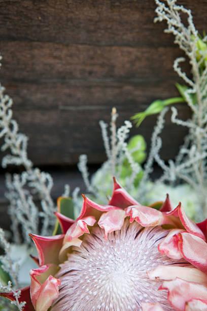 close up of a beautiful protea flower - protea strauß stock-fotos und bilder