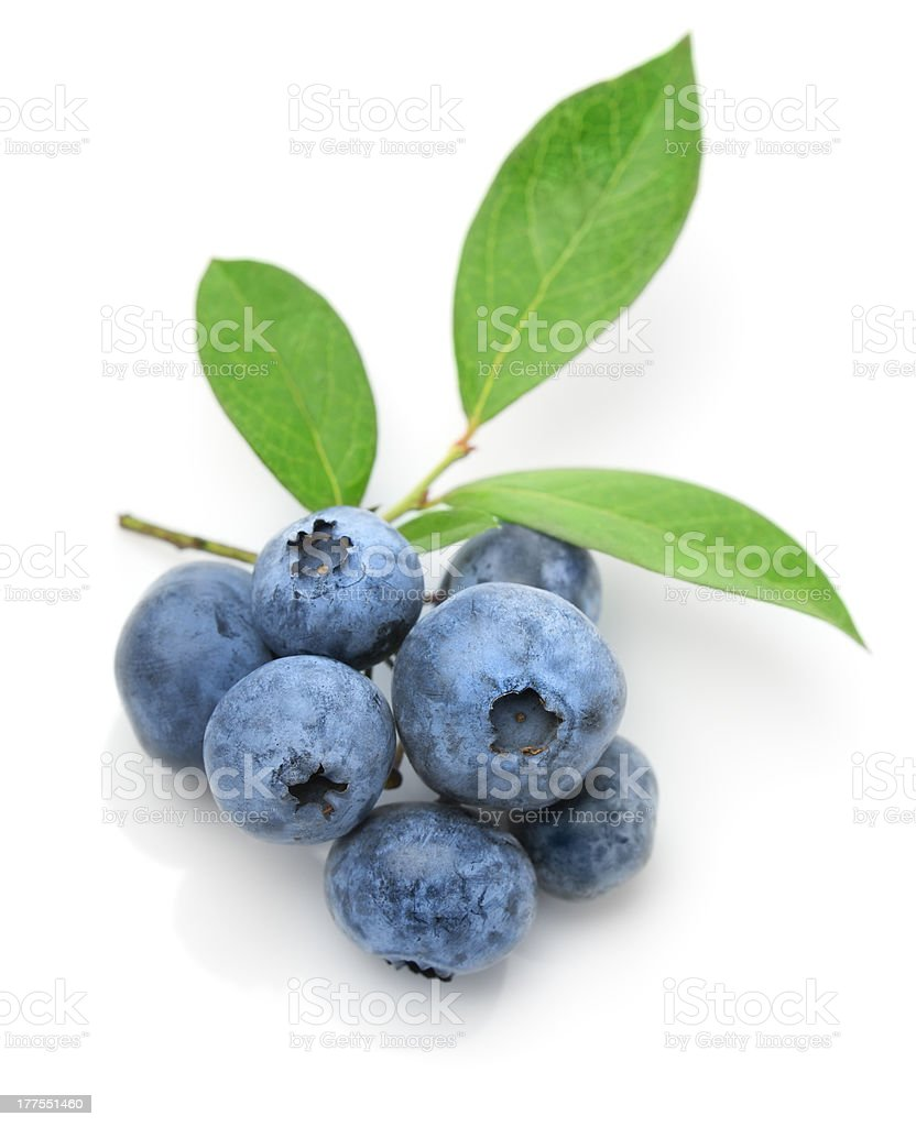 Close up of a blueberry twig stock photo