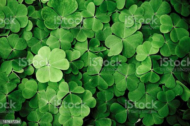 Close up of a bunch of green clover picture id157617234?b=1&k=6&m=157617234&s=612x612&h=6 f6w20tygfgi07pkpvuqqn0uir1g1mv3w16ppfgoe8=