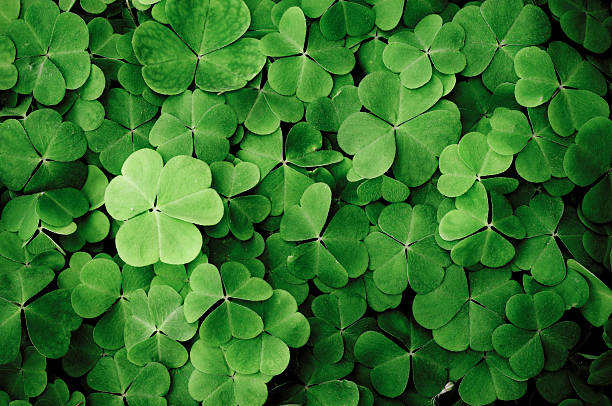 close up of a bunch of green clover - klavertje vier stockfoto's en -beelden