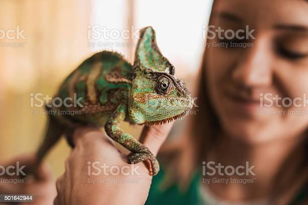 Close up of a chameleon in womans hand picture id501642944?b=1&k=6&m=501642944&s=612x612&h=dkaps76q2y gkiaerzbdslcmzoibnp fno1btfjjwgk=