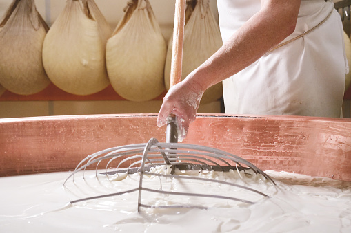 Close up of a cheesemaker is preparing  a form of Parmesan cheese using fresh and biologic milk following the ancient Italian tradition in a dairy factory.