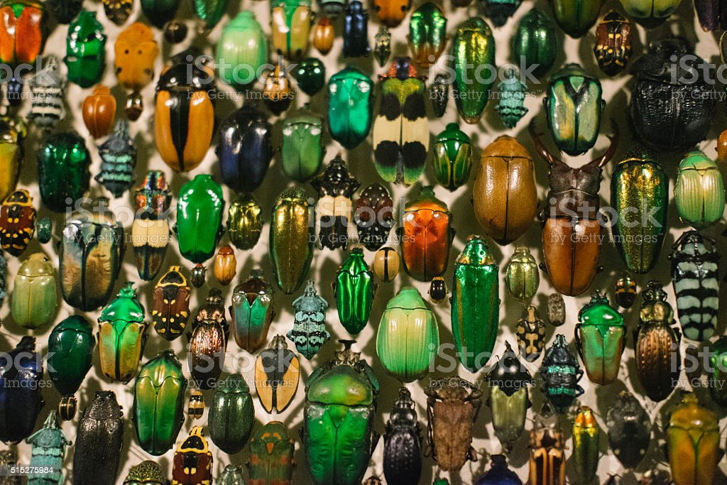 Close up of a collection of insects stock photo