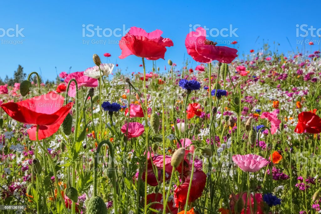 Close up of a colorful wildflower meadow – Foto