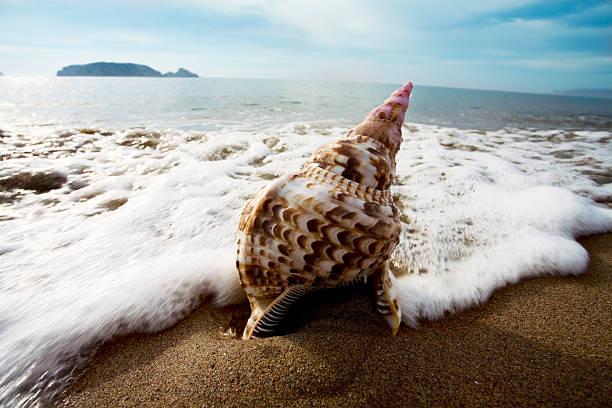 Die Conch-Muschel am Strand in Wellen – Foto