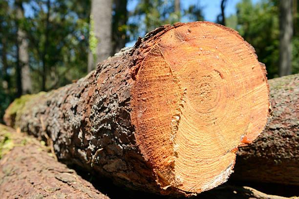 Primo piano di un taglio Albero nella foresta - foto stock