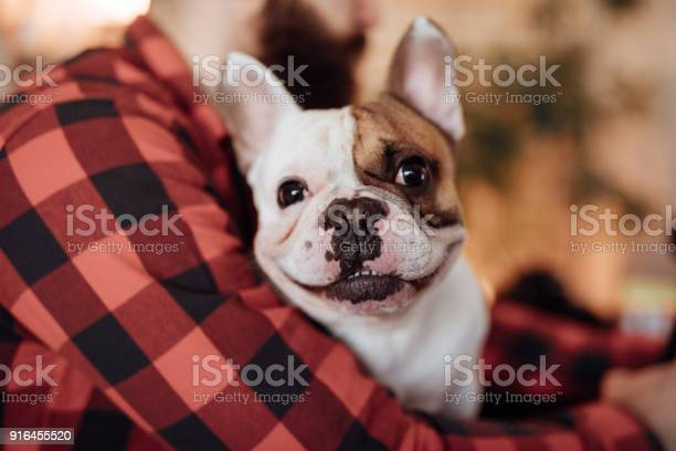 Close up of a cute french bulldog picture id916455520?b=1&k=6&m=916455520&s=612x612&h=fqwqxmkd wppxni4hgpcnsyglr ogahtuv qmzbe8v0=