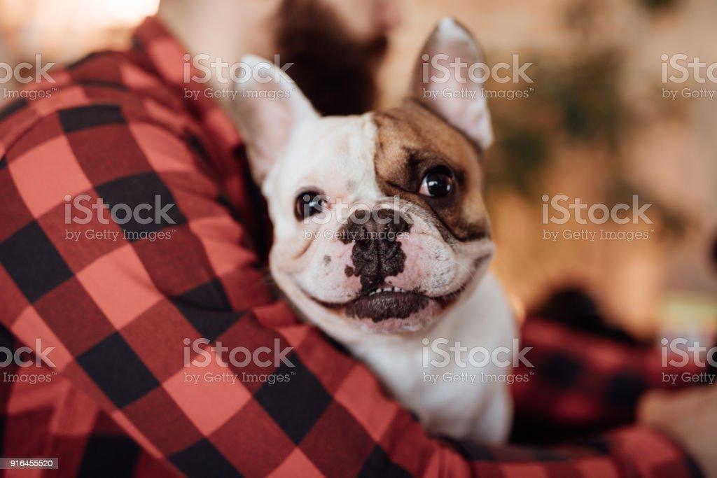 Nahaufnahme von einem niedlichen französische Bulldogge – Foto