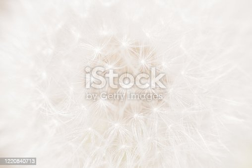 Close up of a Dandelion seed head.  Sometimes these are called blowballs or clocks.  Selective focus.  Belfast, Northern Ireland.