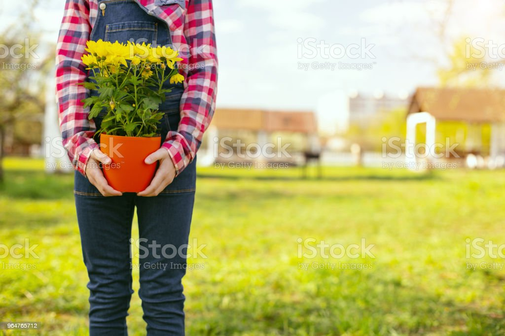 Close up of a flower pot royalty-free stock photo