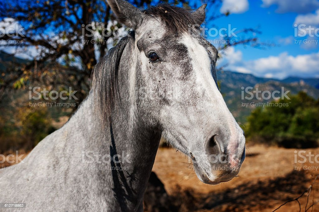 Close up of a gray horse in the countryside - foto de acervo