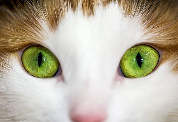 Close up of a green cat eye picture id501170745?b=1&k=6&m=501170745&s=612x612&w=0&h=hjldwjxze0sqoz5kcuok4aqsebi 14jpuozl46bc8hq=