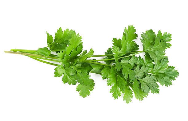 close up of a green coriander leaf - parsley stock photos and pictures