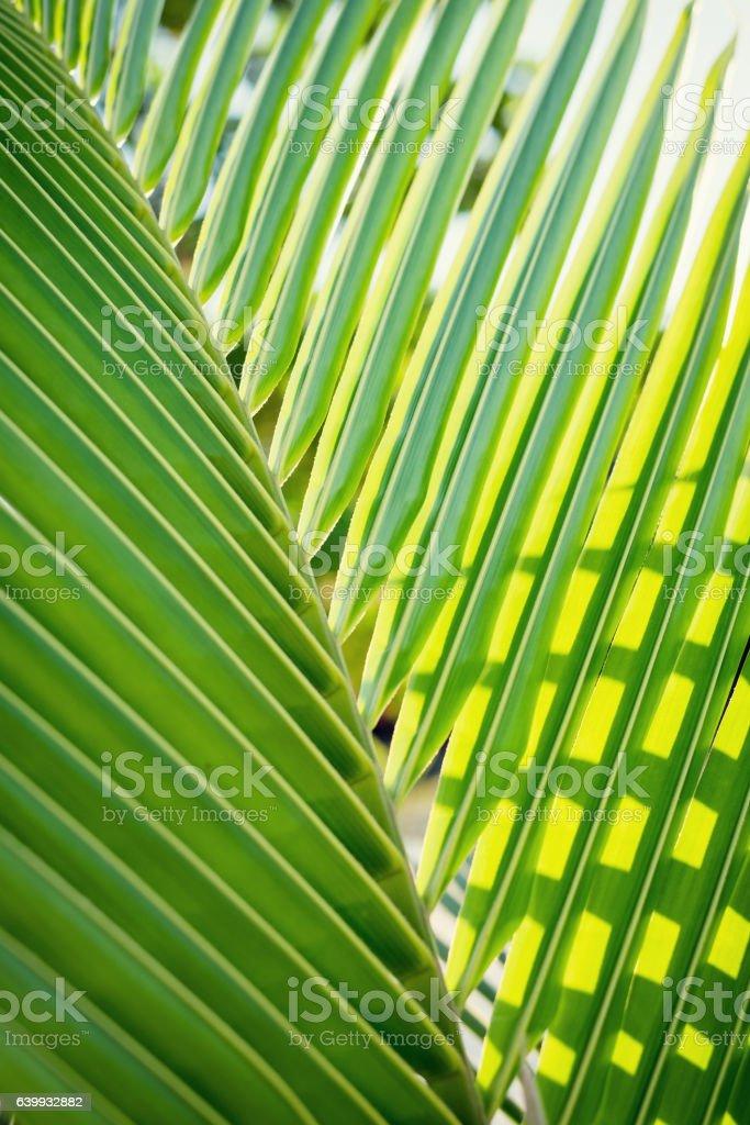 Close up of a green fresh palm tree leaf - Photo