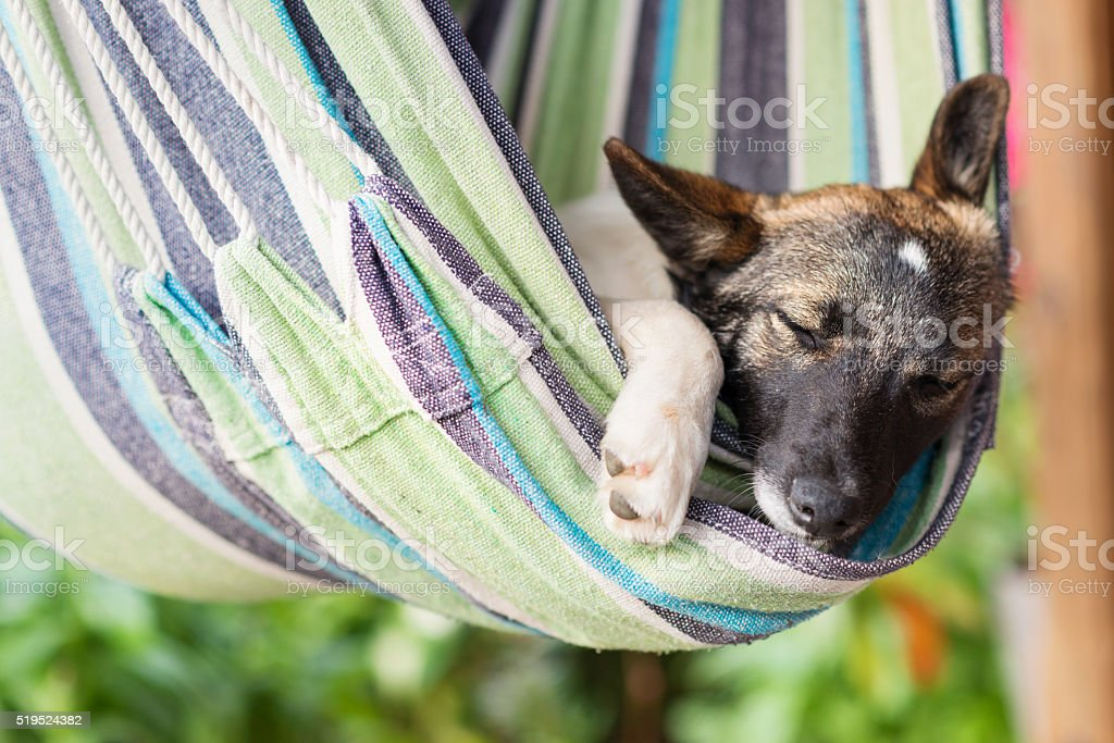 Close up of a happy dog sleeping in striped hammock. stock photo