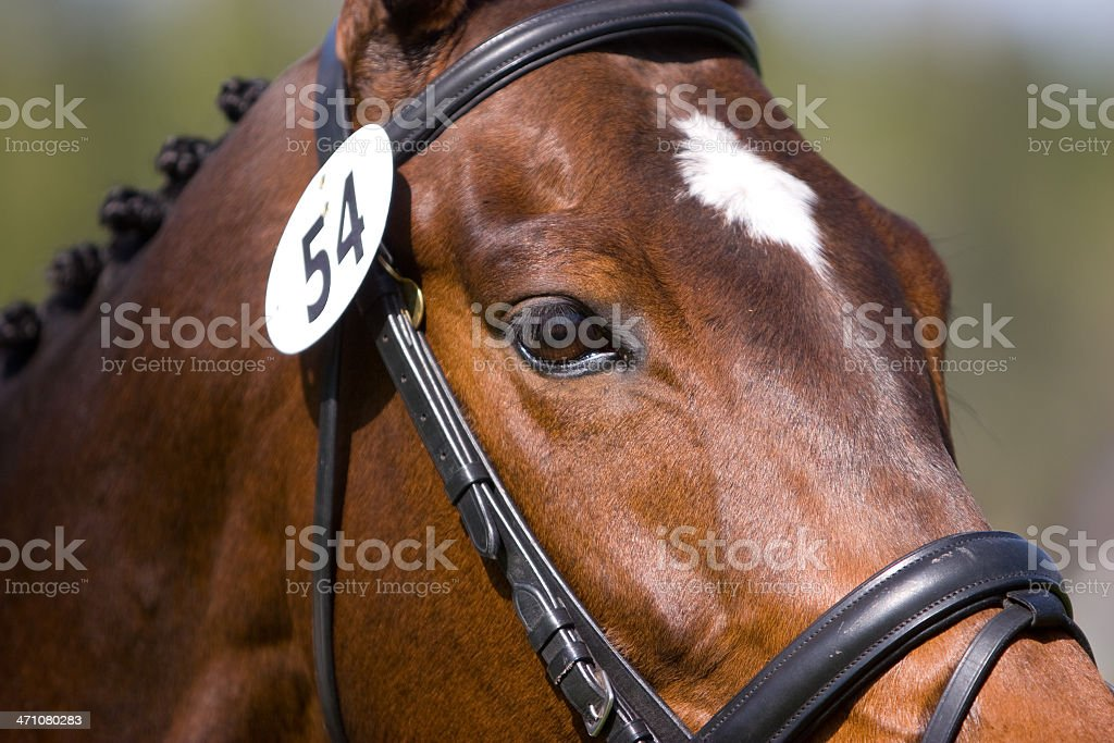 Close Up of a Horse stock photo