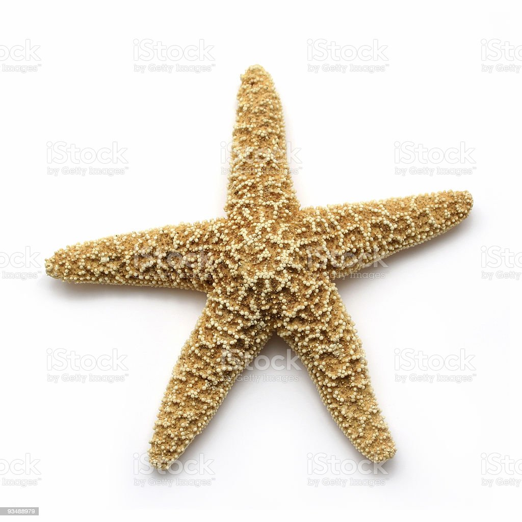 Close up of a lonely starfish from the sea stock photo