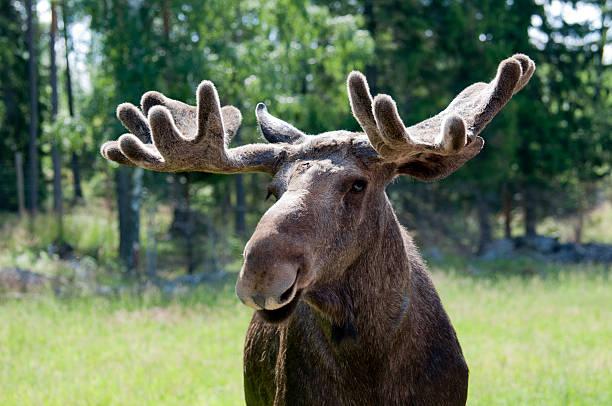Nahaufnahme von moose – Foto