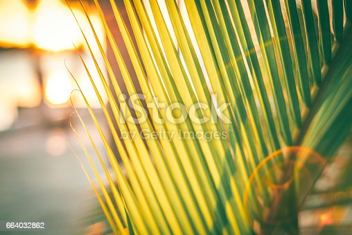 A close up photo of a palm tree on the beach with lens flare in the Florida Keys in the USA.