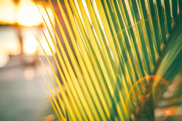 A close up of a palm tree on the beach. stock photo