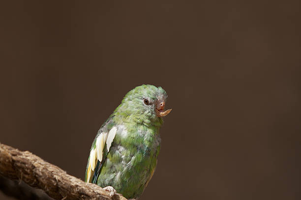 Close up of a parrot with an injured beak stock photo