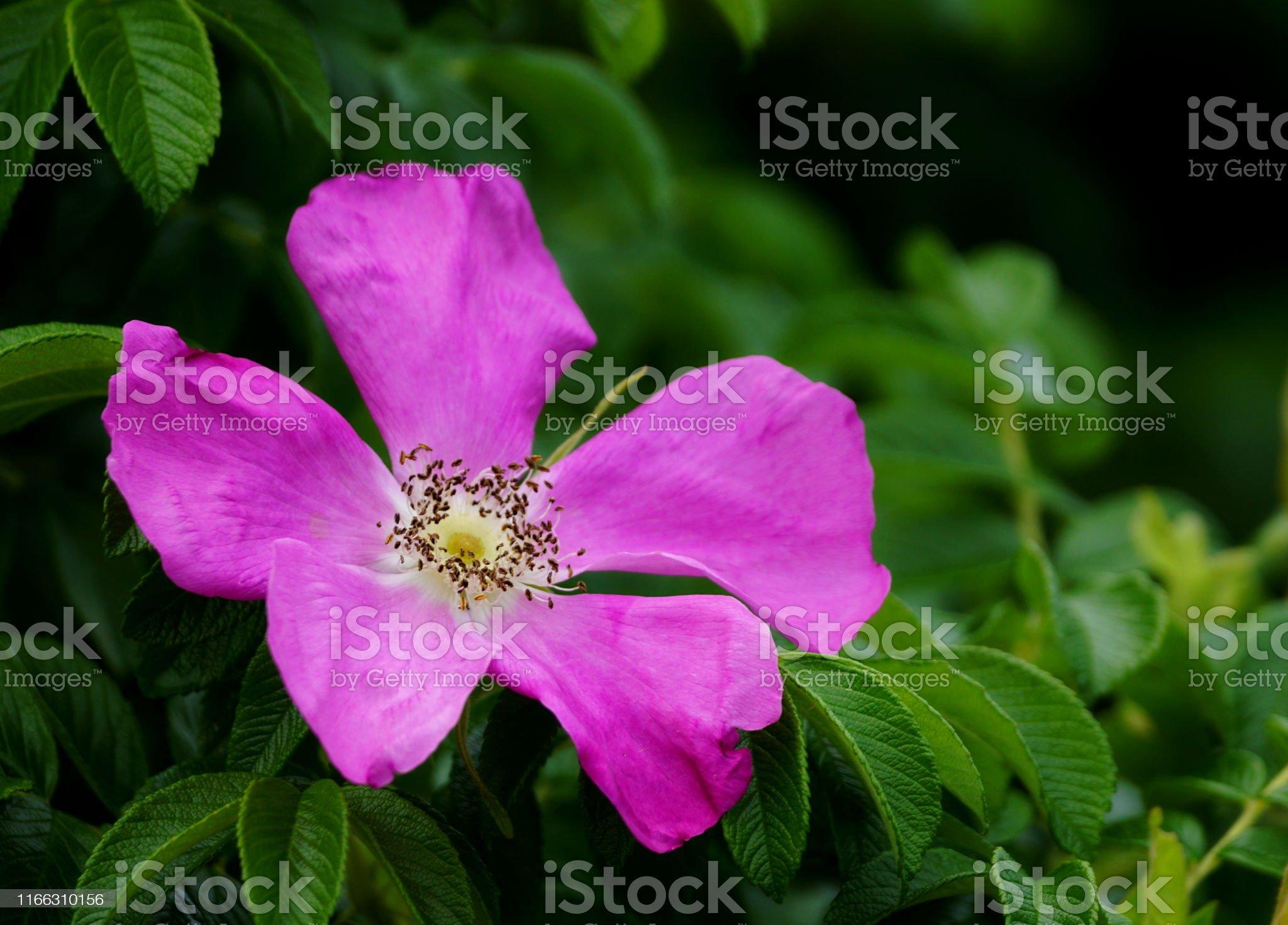 produto rosa selvagem reclame aqui