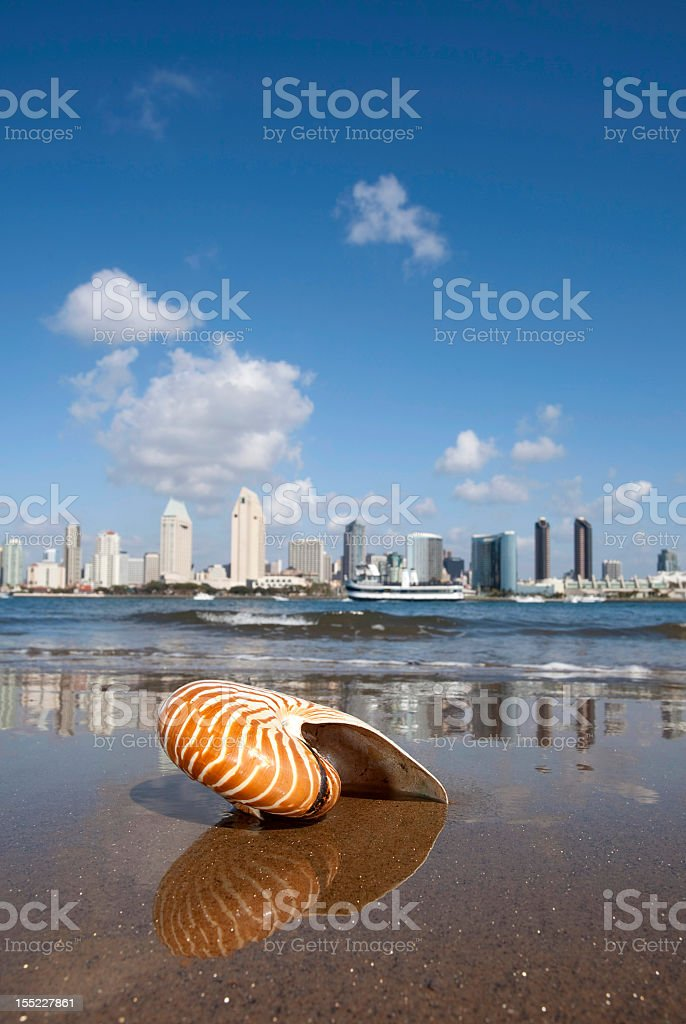 Close up of a seashell against a city view royalty-free stock photo