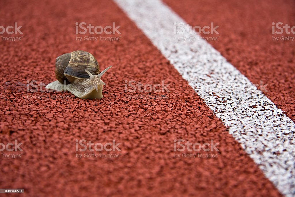 Close up of a snail on a race track royalty-free stock photo